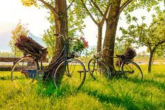 Bright memories (Sergio '75) Tags: old light italy green nature sergio bike bicycle june canon countryside italia glow bright country natur naturallight natura friuli canonef2470mmf4lisusm canoneos70d sergio75