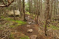 Stepping Stones... (deanspic) Tags: forest newfoundland moss path blackhead steppingstones eastcoast capespear borealforest eastcoasttrail g3x nfld2016