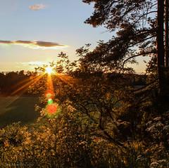 Summer sun (Joni Mansikka) Tags: trees sunset summer sky nature rural suomi finland landscape evening colours outdoor canonefs1855mmf3556iii merimasku