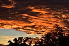 Lava (Dreaming of the Sea) Tags: sunset sky storm june clouds nikon dusk bluesky palmtrees nikkor 70300mm bundaberg redsunset 2016 orangesunset nikkor70300mm d5500 22ed