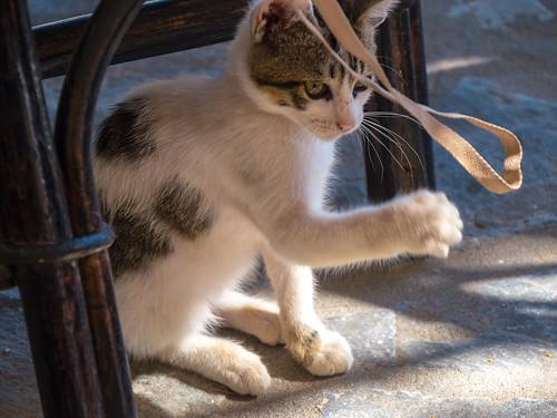 cat - γάτα