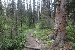Karst springs Alberta Canada (davebloggs007) Tags: lake day walk trails springs short karst watridge