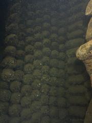 SS Humbria - Arrecife Wingate - Port Sudan (JuanAnd-erwater) Tags: portsudan seleccionar humbria