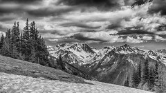 A B&W moment (Matthew James Lewis) Tags: trees blackandwhite snow beauty washington olympicnationalpark magicalmoments olympicmountains mccartneypeak grandvalleytrail ziess50mm17cy