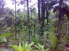 27072008371 (Gokul Chakrapani) Tags: waterfalls karnataka westernghats bolle charmadi