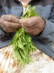 Tying vegetables (prondis_in_kenya) Tags: leaf kenya nairobi tie vegetable string sack kayole hotdryseason