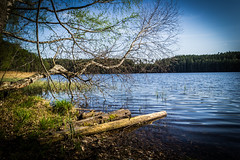 Lake #2 (AlanScerbakov) Tags: trees lake nature landscape nikon lakes 1855mm lithuania lakescape d3100 alanscerbakov
