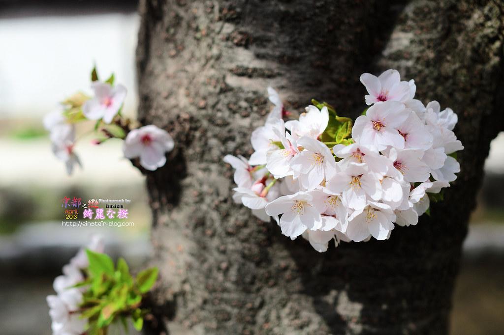 2013-04-01-09h50m21IMG_9962