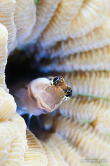 IMG_4873 (Andrey Narchuk) Tags: life sea portrait marine underwater dahab redsea creature fish2