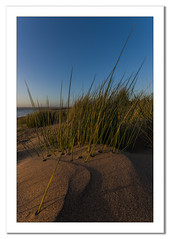 Maram Grass at Instow (Travels with a dog and a Camera :)) Tags: uk sunset sea england southwest west art beach digital photoshop dc pentax unitedkingdom south north sigma devon april 1020mm 44 k5 lightroom northdevon instow cs6 1456 justpentax sigma1020mm1456dc pentaxart pentaxk5 photoshopcs6 lightroom44