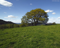 Tomgarrow Tree (SwaloPhoto) Tags: blue trees green field grass rural scotland woodlands farming perthshire pasture agriculture dunkeld tomgarrow
