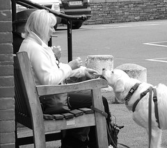 Good Boy (Fire*Sprite*75) Tags: street blackandwhite woman dog monochrome lady bench photography harbour strangers scene treat padstow quayside goodboy