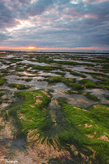 Gone Green (Dave Brightwell) Tags: sunset sky seascape seaweed beach moss rocks colours cleveland windfarm redcar davebrightwell
