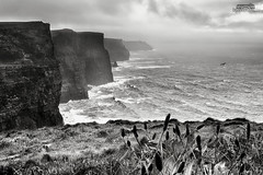 Cliffs of Moher (bgspix) Tags: travel ireland sea blackandwhite bw irish seascape rain weather fog canon landscape coast iso200 eire cliffs 1320 brouillard moher falaises f9 irelande ef24105mmf4lisusm canoneos5dmarkiii