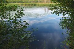 IMG_0605 (Dan Correia) Tags: amherst swamp clouds reflection aperture 15fav topv111 topv333 topv555