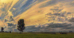 The sky is the daily bread of the eyes (Wim Koopman) Tags: sky holland tree netherlands dutch grass clouds fence farming nederland meadow dramatic grassland polder nikkon horzion d5200