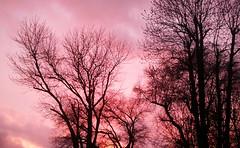 Restos de Otoo en Primavera. (Francisca A.) Tags: chile plaza trees sunset naturaleza tree nature atardecer rboles cielo rbol vista temuco teodoro