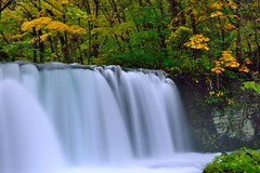 Choshi Waterfall (Vincent_Ting) Tags: autumn fall leaves japan stream aomori  maples milky silky      oirase      northeastjapan oirasekeiryu   oirasekeiryuhotel vincentting