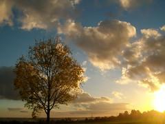 Christus, der ist mein Leben (amras_de) Tags: autumn tree automne herbst herfst træ boom arbor árbol otoño toamna albero tre puu autunno arbre árvore haust strom baum outono arbo höst fa träd tré høst syksy tardor podzim ruduo koks sügis drvo rudens drzewo sonbahar jesen jesien medis hairst arbore agaç stablo efterår zuhaitz osz crann drevo udazken autunnu autumnus autuno agüerro hierscht fómhar àrvulu