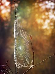 (Alin B.) Tags: wood autumn tree fall forest spider rust web rustic spiderweb rusty cobweb toamna alinbrotea