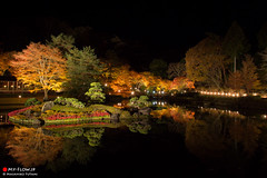 REFLECTION (Masahiko Futami) Tags: reflection fall nature water japan night canon landscape pond asia photographer autumnleaves 日本 紅葉 秋 自然 風景 池 夜 反射 eos5dmarkiii