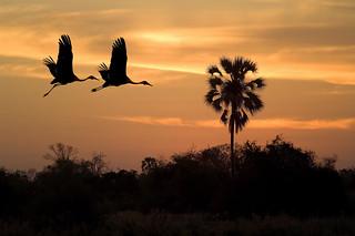Botswana Okavango Delta Photo Safari 82