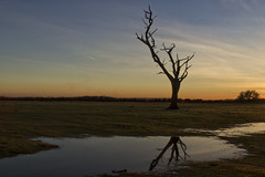 AFTER THE RAINS.... (mark_rutley) Tags: sunset reflection rain puddle deadtree newforest thenewforest thelonetree