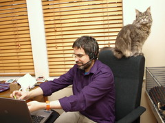 Robert and his PA, 29 Jan 14 (Castaway in Scotland) Tags: blue pet cute animal cat silver grey scotland maine adorable kitty olympus east coon lothian musselburgh e410
