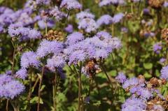 "Delano Farm Flowers <a style=""margin-left:10px; font-size:0.8em;"" href=""http://www.flickr.com/photos/91915217@N00/12450285143/"" target=""_blank"">@flickr</a>"