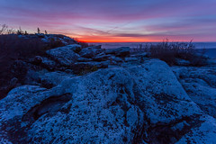 Dolly Sods Blue Hour