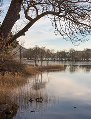 Loch Ard in Winter Morning Light (Dylan Nardini) Tags: winter water sunrise scotland 2015 lochard