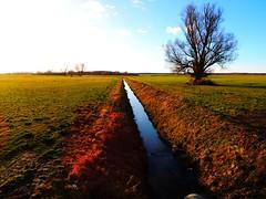 der Meynbach in Groß Warnow (Sophia-Fatima) Tags: winter tree landscape deutschland bach brook landschaft baum mecklenburgvorpommern groswarnow dermeynbach