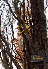 Tree of wishes (Sonnentänzer) Tags: autumn sun tree art germany gold golden chair kunst hamburg herbst wish hamburgo baum wunsch