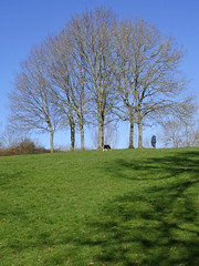 Walking the Dog - Fairwater Dell (Dave Smitham) Tags: fairwater winterlandscape walkingthedog thedell fairwaterpark