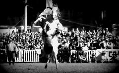 El tordillo (Eduardo Amorim) Tags: brazil horses horse southamerica criollo caballo uruguay cheval caballos cavalos prado montevideo pferde cavalli cavallo cavalo gauchos pferd hest hevonen chevaux gaucho  amricadosul montevidu hst uruguai gacho  amriquedusud  gachos  sudamrica suramrica amricadelsur  sdamerika crioulo caballoscriollos criollos jineteada   americadelsud gineteada  crioulos cavalocrioulo americameridionale caballocriollo eduardoamorim cavaloscrioulos pasomolino