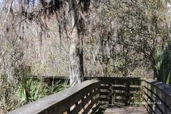 Lost Bridge Trail Boardwalk (Gerald (Wayne) Prout) Tags: county bridge usa bar canon circle lost florida reserve trail boardwalk lakeland polk prout polkcounty lostbridgetrail circlebbarreserve cityoflakeland canoneso60d geraldwayneprout