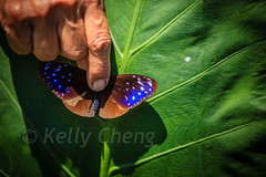 Taiwan-121113-226 (Kelly Cheng) Tags: travel color colour green tourism nature animals horizontal fauna butterfly daylight colorful asia day taiwan vivid colourful traveldestinations  northeastasia
