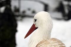 IMG_8192 (u.wittwer) Tags: park zoo schweiz switzerland tiere suisse tierpark heimat arth naturpark goldau widi