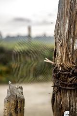 Tela de araa y Montaas (TobiTr3s) Tags: naturaleza detalle azul madera paisaje alambrado cerca antioquia alambre telaraa alambres