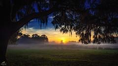 Sunrise over an early morning fog (Don Sullivan) Tags: mist fog sunrise florida farmland nikond810