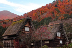 Gassho-zukuri (Elios.k) Tags: horizontal outdoors nopeople colour color house roof hill trees autumn leaves dense forest foliage mountain sky blue travel travelling november 2015 vacation canon 5dmkii camera photography mold moss gasshzukuri gassho style farmhouse architecture traditional japanese thatched straw unesco worldheritagesite village ogimachi shirakawago shirakawagoarea shirakawag gifuprefecture onodistrict no chbu chubu honsu asia japan