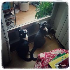 MIS GATOS (claverinza) Tags: gatos dos felinos animales mascotas mininos animalesdecompaa