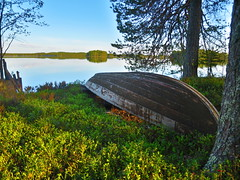 old rowing boat by the lake (VisitLakeland) Tags: blue summer lake tree green nature water forest finland calm puu lakeland vesi mets kes luonto jrvi tyyni kuopiotahko