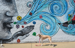 Flower Child (houndstooth4) Tags: dog greyhound bunny ddc odc day165366 dogchal 13jun16 366the2016edition 3662016