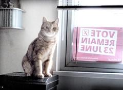 remain (buckaroo kid) Tags: uk orange london cat ginger feline tabby woody eu remain woodythecat