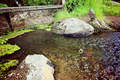 # () Tags: nature water creek duct stream current watercourse rivulet rill