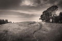 skyline (areacode) Tags: california trees music food sun grass wind path air warmth norcal