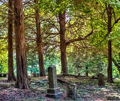 Old Cemetery (Scott Werkheiser) Tags: tree chattanooga cemetery grave stone tn stones hixson
