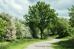 Tree Blossom (Alanchippyh) Tags: blue trees sky plants white green blossom outdoor outdoore