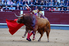 Alejandro Talavante (Fotomondeo) Tags: madrid espaa spain bull bullfighter toros bullfight toro bullring matador torero sanisidro plazadetoros corridadetoros lasventas alejandrotalavante
